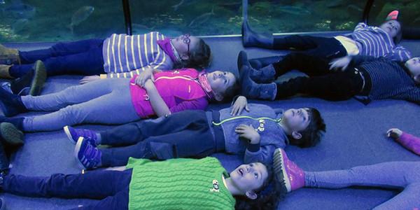 Aquariumen